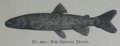 Picture Natural History - No 209 - The Geneva Trout.png