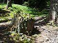 Pilat-Bois de La Plapompaire-sous-bois-01.jpg