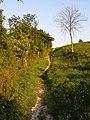 Pilgrims Trail on Twyford Down - geograph.org.uk - 189903.jpg