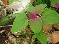 PinkUndGrün Pflanze.jpg