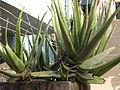 Plant SOTRUK-KATRAAZAI.jpg