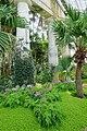 Plants - Laeken Royal Greenhouses - Royal Castle of Laeken - Brussels, Belgium - DSC07480.jpg