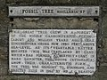Plaque re the fossil tree - geograph.org.uk - 1580949.jpg