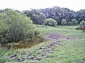 Pond and Pasture - geograph.org.uk - 1390518.jpg