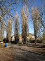 Poplars, Hills Meadow (geograph 2345219).jpg