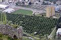 Portakal bahçesi, Kozan - Adana 02.JPG