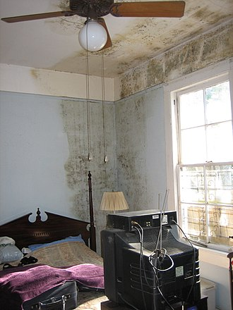 Indoor mold - Although this home experienced minor exterior damage from Hurricane Katrina, small leaks and inadequate airflow permitted mold infestation.