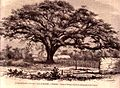 Postal de Saman de Güere 1914.jpg
