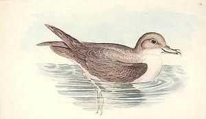 Golfe du Morbihan (Kerguelen) - The islands of the gulf are important for nesting Grey Petrels