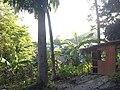 Puerto Galera - Sabang - panoramio (5).jpg