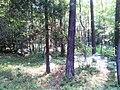 Puszcza Dulowska - panoramio (2).jpg