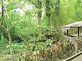 Puyo paseo turístico 5 ene 2015 046 (15599668413).jpg