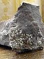 Pyrite (FeS2) inside graptolite argillite (Türisalu formation), Püriit (FeS2) diktüoneemaargilliidis (Türisalu kihistu).jpg
