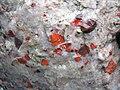 Quartzite & pebbly quartzite with jasper (Lorrain Formation, Paleoproterozoic, ~2.3 Ga; Ottertail Lake Northeast roadcut, near Bruce Mines, Ontario, Canada) 12 (47709680441).jpg