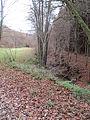 Réserve naturelle domaniale du Ru de Chawion - bois de Staneux - Theux.JPG