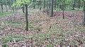 Römischer Wachturm Roschle (RLK8-23) --1.jpg
