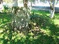 RO CJ Biserica reformata din Fizesu Gherlii (19).JPG