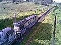 Rebanho de cabras na frente de locomotivas em manobras no pátio da Estação Ferroviária de Itu - Variante Boa Vista-Guaianã km 201 - panoramio.jpg