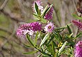 Redcar MMB 03 Lilac Grove.jpg