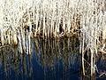 Reflections (4438426319).jpg