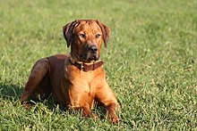 Schulz Dog Kennel Neenah Wi Complains