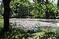 Rhododendronpark Bremen 20090513 003.JPG