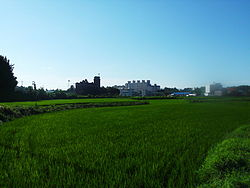 Rice paddies in summer.JPG