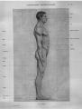 Richer - Anatomie artistique, 2 p. 83.png