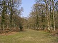 Ride through Islands Thorns Inclosure, New Forest - geograph.org.uk - 386705.jpg