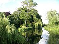 River Cam at Grantchester - geograph.org.uk - 928312.jpg