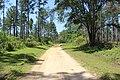 River Creek WMA main road 2.jpg