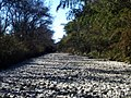 River which withered by a drought.jpg