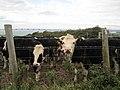 Road to Port Gaverne, Cornwall (461174) (9455869253).jpg