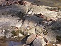 Rocks Potts Branch Trail Umstead SP 5545 (3347268594).jpg