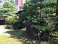 Rocks and pine trees in Jotenji Temple 2.jpg