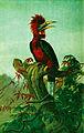 Rufous-necked-hornbill.jpg