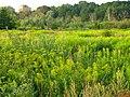 Rumbulas pļavas. Meadows at Rumbula. August, 2015. - panoramio.jpg