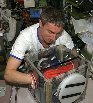 Glovebox - Image: S Krikalev with miniglovebox