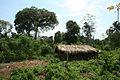 Sabu house Majangir Zone Gambella.jpg