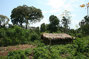 Shabo people - A Shabo house in the village of Yeri (Gambella).