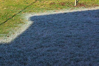 Frost - Hoar frost melting on grass in France