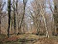 Saint-Sauveur (60), route de Tillarue 3.jpg