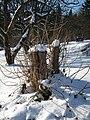 Schnee Kopfweide.JPG