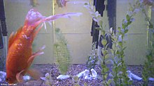A still from a live feed of a fish tank with multiple stream encoding qualities