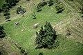 Schweiz Reise Sommer 2013 Ansichten 37.jpg