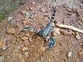 Scorpion (13).jpg