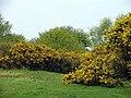Scrubland - geograph.org.uk - 816019.jpg