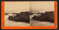 Sea Lions, West End, Farallon Islands, P.O, from Robert N. Dennis collection of stereoscopic views.png