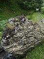 Sedimentary rock in Cwm Doethie - geograph.org.uk - 913236.jpg