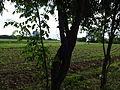 Selo Radiovce-Tetovsko (212).JPG